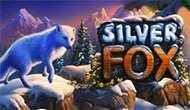 Silver Fox с казино Вулкан